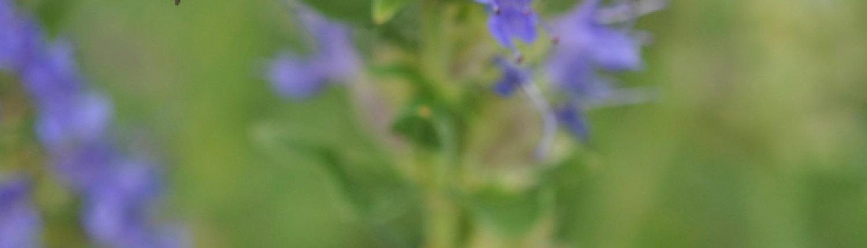 Digital leadership, flower