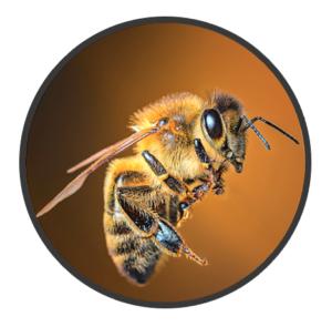 Digital leadership, bee,